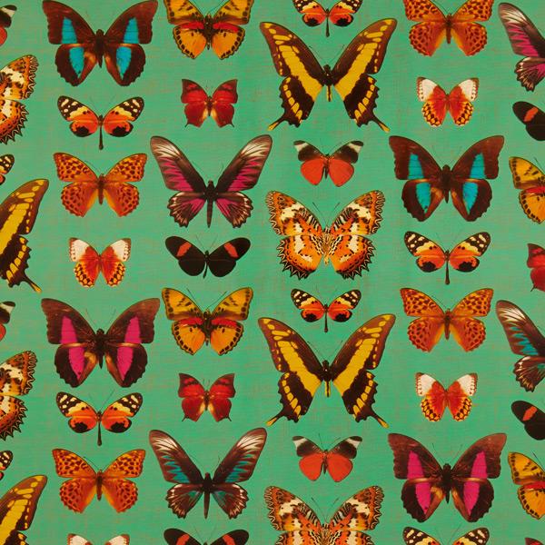 Wrap Deyrolle Butterflies