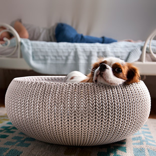 Curver Knit Pet Bed | The Container Store