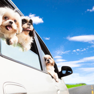 Tips For Travelling with Dogs, Cats & Pets-image